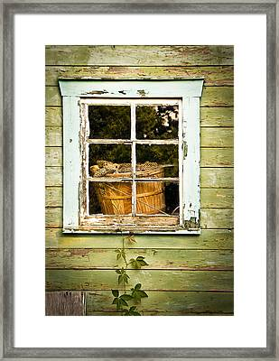 Pine Cones In The Window Framed Print by Maggie Terlecki