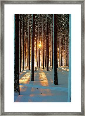 Pine Forest Framed Print by www.WM ArtPhoto.se