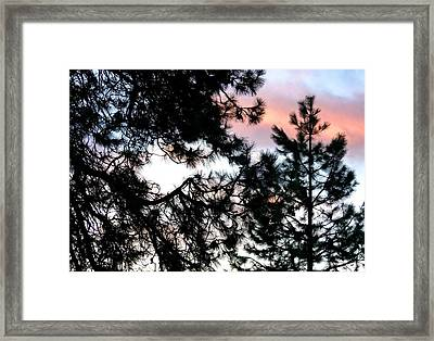 Pine Silhouettes At Sundown Framed Print by Will Borden