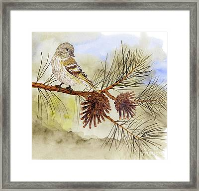Pine Siskin Among The Pinecones Framed Print by Thom Glace