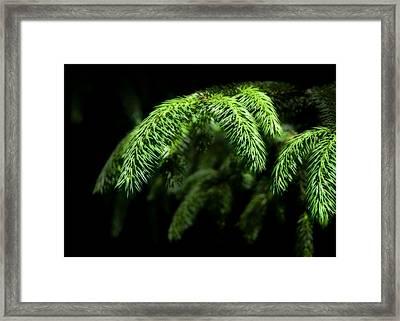 Pine Tree Brunch Framed Print by Svetlana Sewell