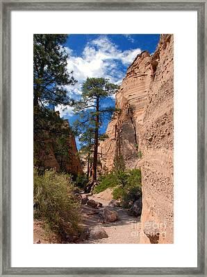 Pine Tree Canyon Framed Print by David Lee Thompson