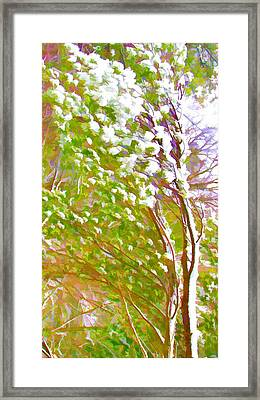 Pine Tree Covered With Snow Framed Print by Lanjee Chee