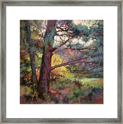 Pine Tree Dance Framed Print by Donna Shortt