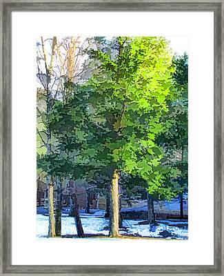 Pine Tree Forest Framed Print by Lanjee Chee