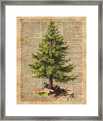 Pine Tree,cedar Tree,forest,nature Dictionary Art,christmas Tree Framed Print by Jacob Kuch