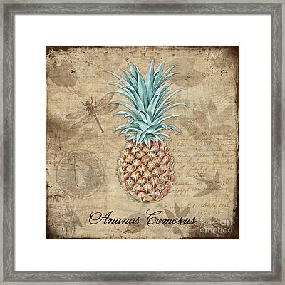 Pineapple, Ananas Comosus Vintage Botanicals Collection Framed Print by Tina Lavoie