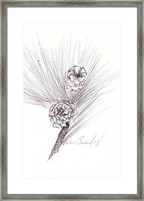 Pinecones Framed Print by Barbara Cleveland
