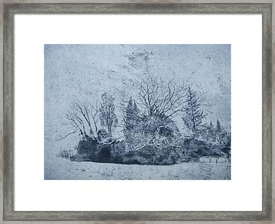 Pinetum  Cammo Framed Print by Calum McClure