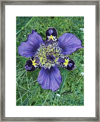 Pinewoods Lily Framed Print by Beverly Fuqua
