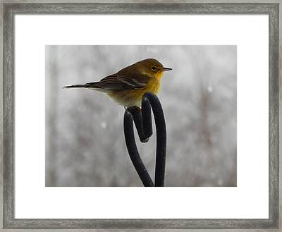 Pining For You Framed Print by Karen Cook