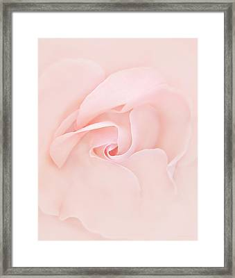 Pink Abstract Rose Flower Framed Print by Jennie Marie Schell