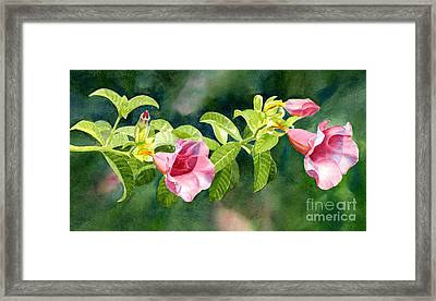 Pink Allamanda Blossoms With Background Framed Print by Sharon Freeman