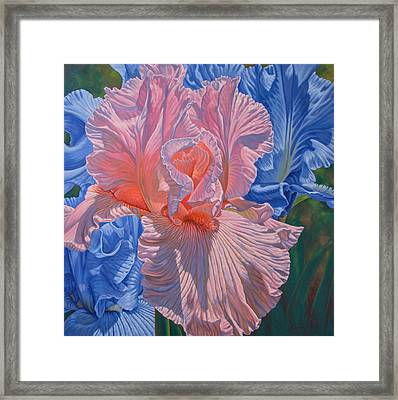 Floralscape 1 - Pink And Blue Irises Framed Print by Fiona Craig