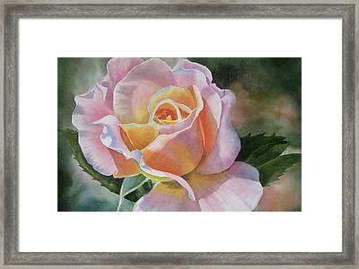 Pink And Peach Rose Bud Framed Print by Sharon Freeman