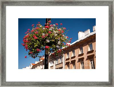 Pink And Red Ivy Leaved Geranium  Framed Print by Arletta Cwalina