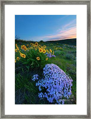 Pink And Yellow Sunset Framed Print by Mike Dawson