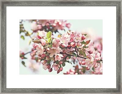 Pink Apple Blossoms Framed Print by Sandra Cunningham