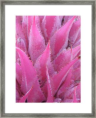 Pink Cactus Framed Print by Nikki Smith
