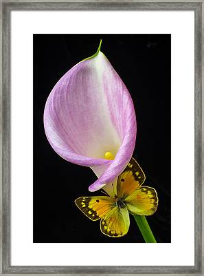 Pink Calla Lily With Yellow Butterfly Framed Print by Garry Gay