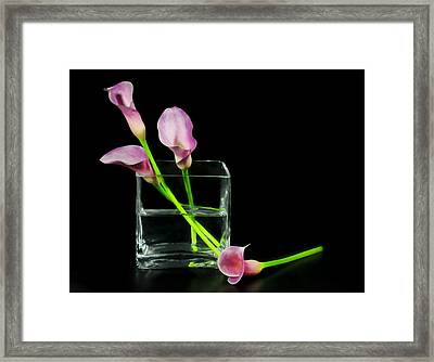 Pink Callas Framed Print by Diana Angstadt