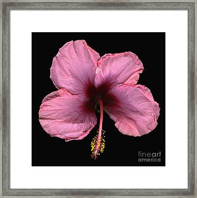 Pink Candy Framed Print by Christian Slanec