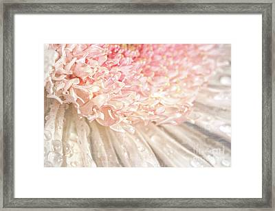 Pink Chrysanthemum With Antique Distress Framed Print by Sandra Cunningham