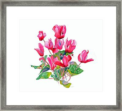 Pink Cyclamen Framed Print by Pat Yager