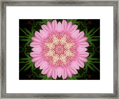 Pink Daisy Kaleidoscope Framed Print by Nancy Pauling