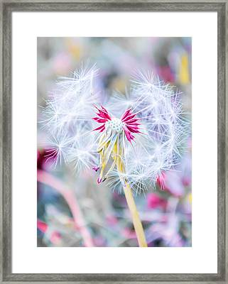 Pink Dandelion Framed Print by Parker's Lens Photography