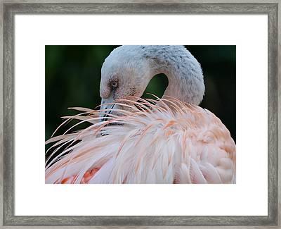 Pink Darkness 2 Framed Print by Fraida Gutovich