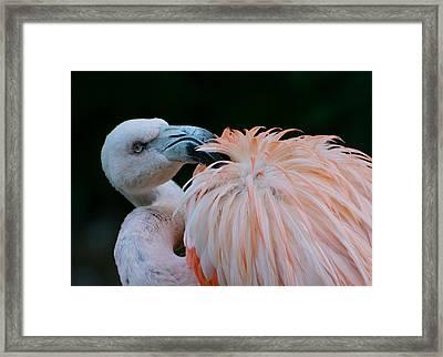 Pink Darkness 3 Framed Print by Fraida Gutovich