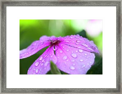 Pink Droplets Framed Print by Sean Davey