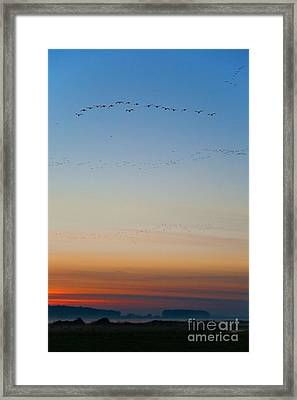 Pink Feet And Fog Framed Print by John Edwards