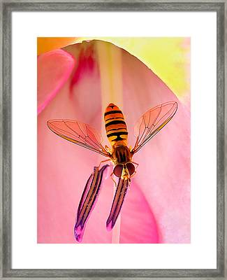 Pink Flower Fly Framed Print by Bill Caldwell -        ABeautifulSky Photography