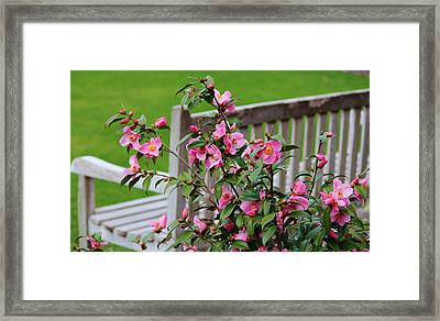 Pink Flowers By The Bench Framed Print by Cynthia Guinn