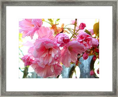 Pink Flowers Framed Print by D R TeesT