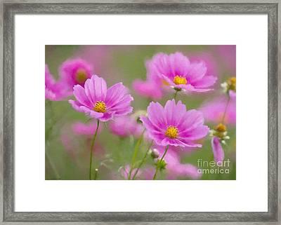 Pink Flowers Framed Print by Veikko Suikkanen