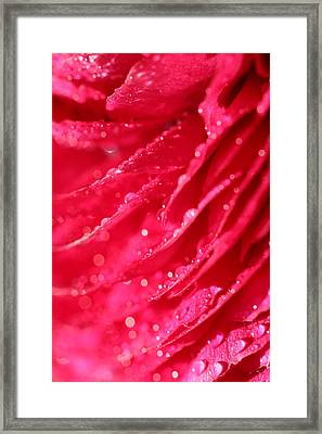 Pink Framed Print by Heike Hultsch