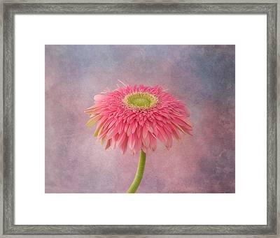 Pink In The Garden Framed Print by Kim Hojnacki