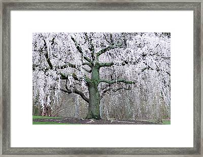 Pink Lady  Framed Print by Don  Wright