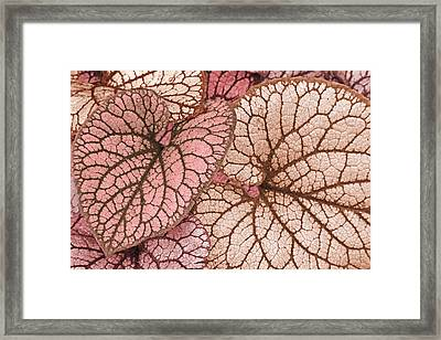 Pink Leaves Framed Print by James Steele