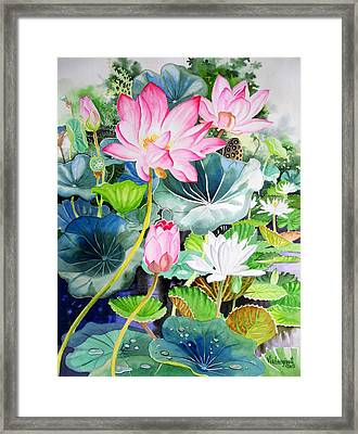 Pink Lotus And White Water Lilies Framed Print by Vishwajyoti Mohrhoff