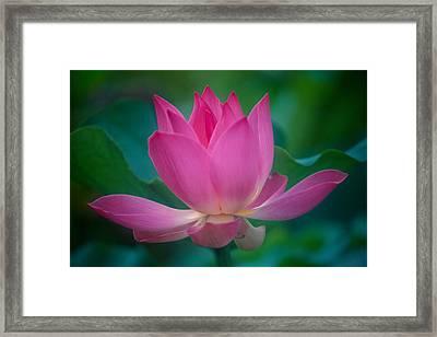 Pink Lotus Blossom Framed Print by Kyle Rothenborg - Printscapes