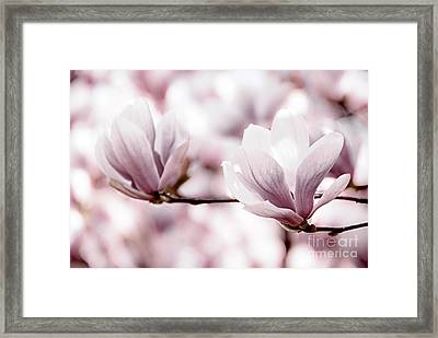 Pink Magnolia Framed Print by Elena Elisseeva