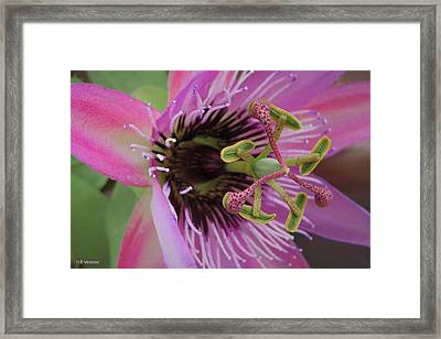 Pink Miracle Framed Print by B Vesseur
