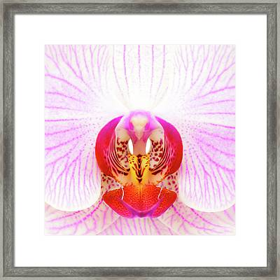 Pink Orchid Framed Print by Dave Bowman