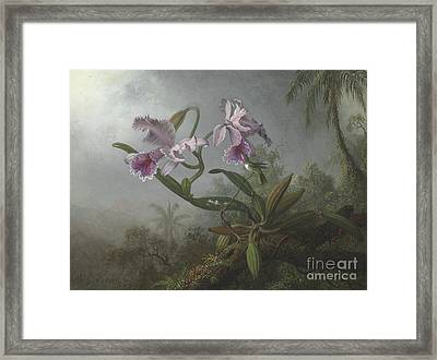 Pink Orchids And Hummingbird On A Twig, 1875 Framed Print by Martin Johnson Heade