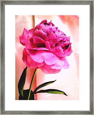 Pink Peony And Pink Satin Framed Print by Carol Reynolds