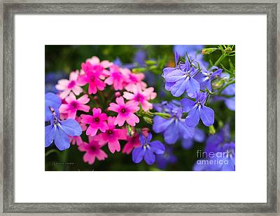 Pink Phlox And Violet Flowers Framed Print by Corey Ford